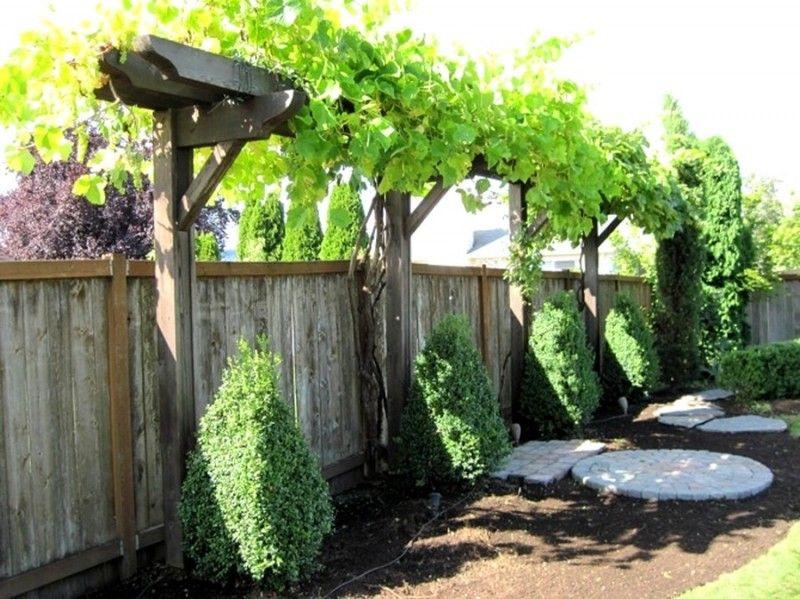 Une vigne dans votre jardin